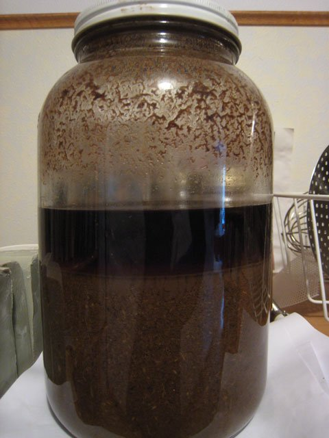 Photo of gallon jar with Echinacea purpurea menstruum in it.