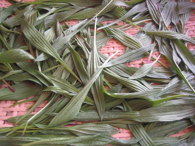 A photo of Plantain leaves drying on a flat woven basket.