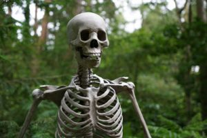 Strong, resilient bones without Osteoporosis