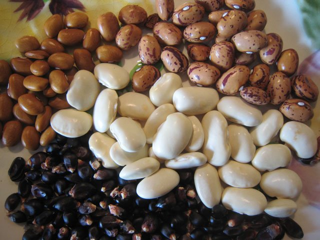 Photo of bean and corn seed.