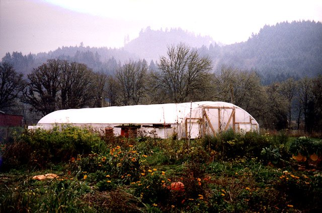 Photo of a garden and greenhouse in the fall.
