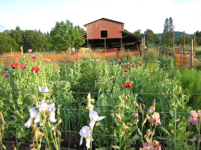 Photo of red barn in background with garden in front.