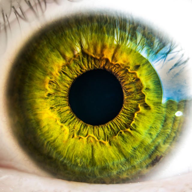 A photo of a green eye close up.