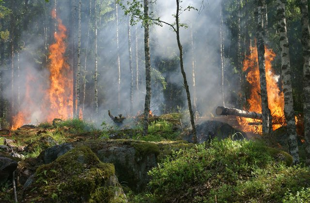 Photo of a forest on fire.