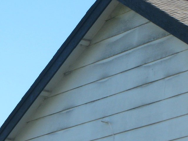 A close up photo of black mold on house.