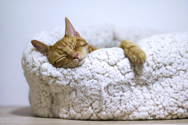 Photo of a cat sleeping in it's kitty bed.