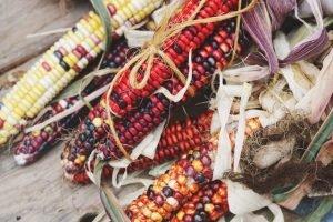 Colorful corn on the cob photo.