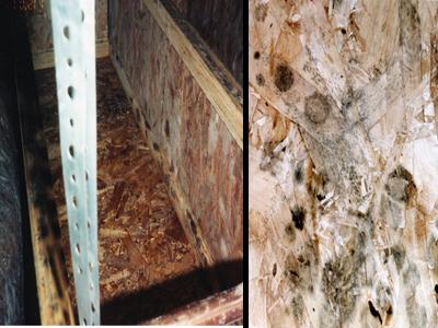 Photo of mold growth on strand board.