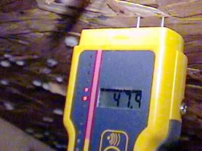 Photo of a moisture meter's prongs being inserted into moldy strand board.