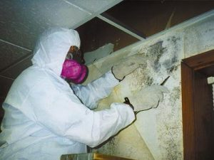 A photo of someone dressed to clean up mold.