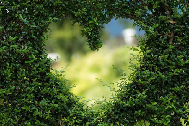 Heart shape made by the leaves of trees coming together.