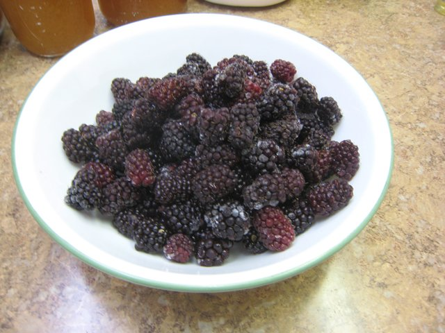 Berries for fermenting