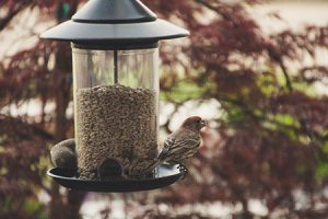 birds-at-bird feeder