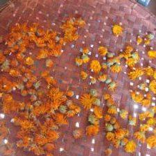 Photo of Calendula flowers drying.