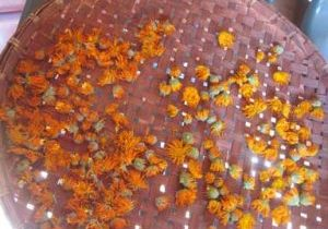 Photo of Calendula flowers drying.
