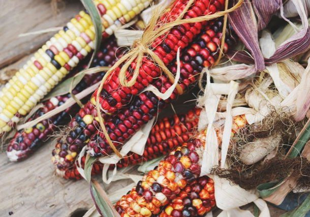 Colorful corn on the cob photo.