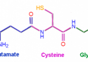 Drawing of glutathione structure.