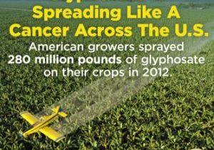 Plane spraying glyphosate across a field.