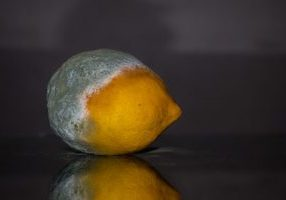 A photo of a moldy lemon.