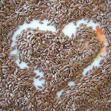 Linum usitatissimum Flax
