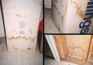 Photo of mold growing on building materials in wall.