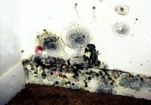 Photo of mold growth on wall and baseboard.