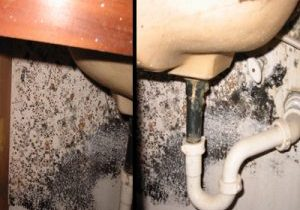Photo of mold growing under a bathroom sink.