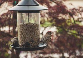 birds-at-bird feeder