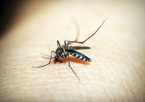 Photo of mosquito on someone's skin.