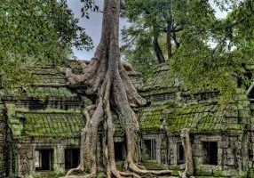 Photo of building being taken over by tree roots.