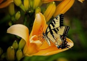 The death of the caterpillar transforms it into the the butterfly