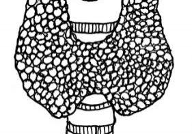 Thyroid gland drawing